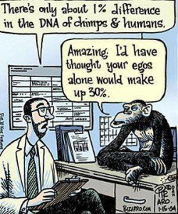 chimp and human DNA 1 percent