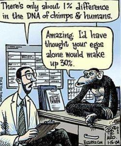 chimp and human DNA 1 percent